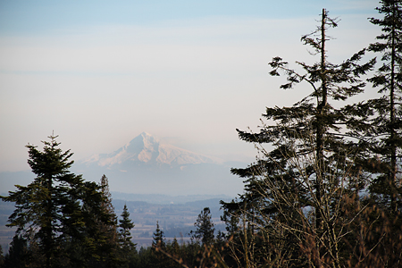 Mt. Hood from Chehalem Ridge